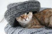 cat-2201460_1280