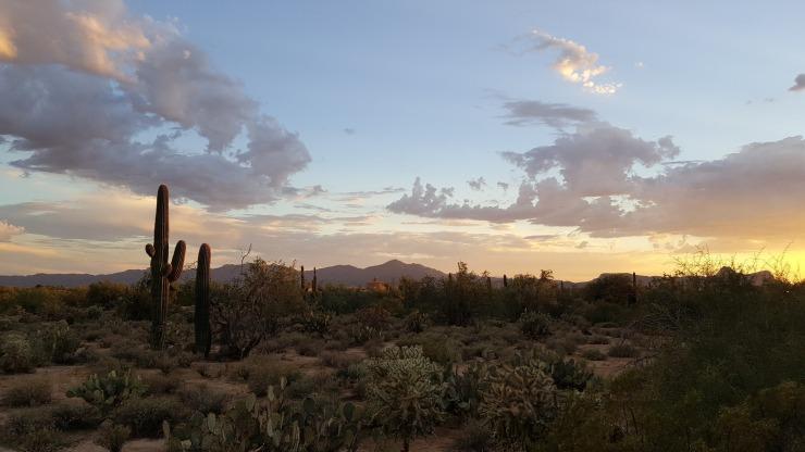saguaro-2714996_1920