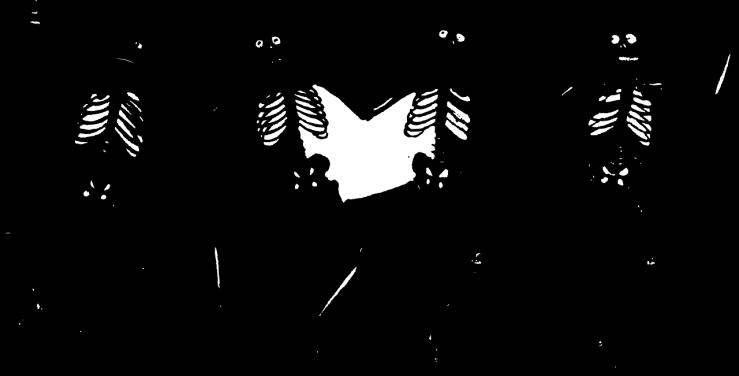 skeletons-32459_1280