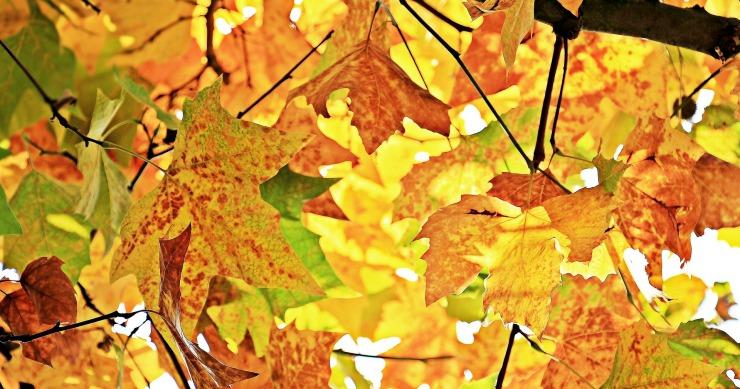 autumn-1655915_1920