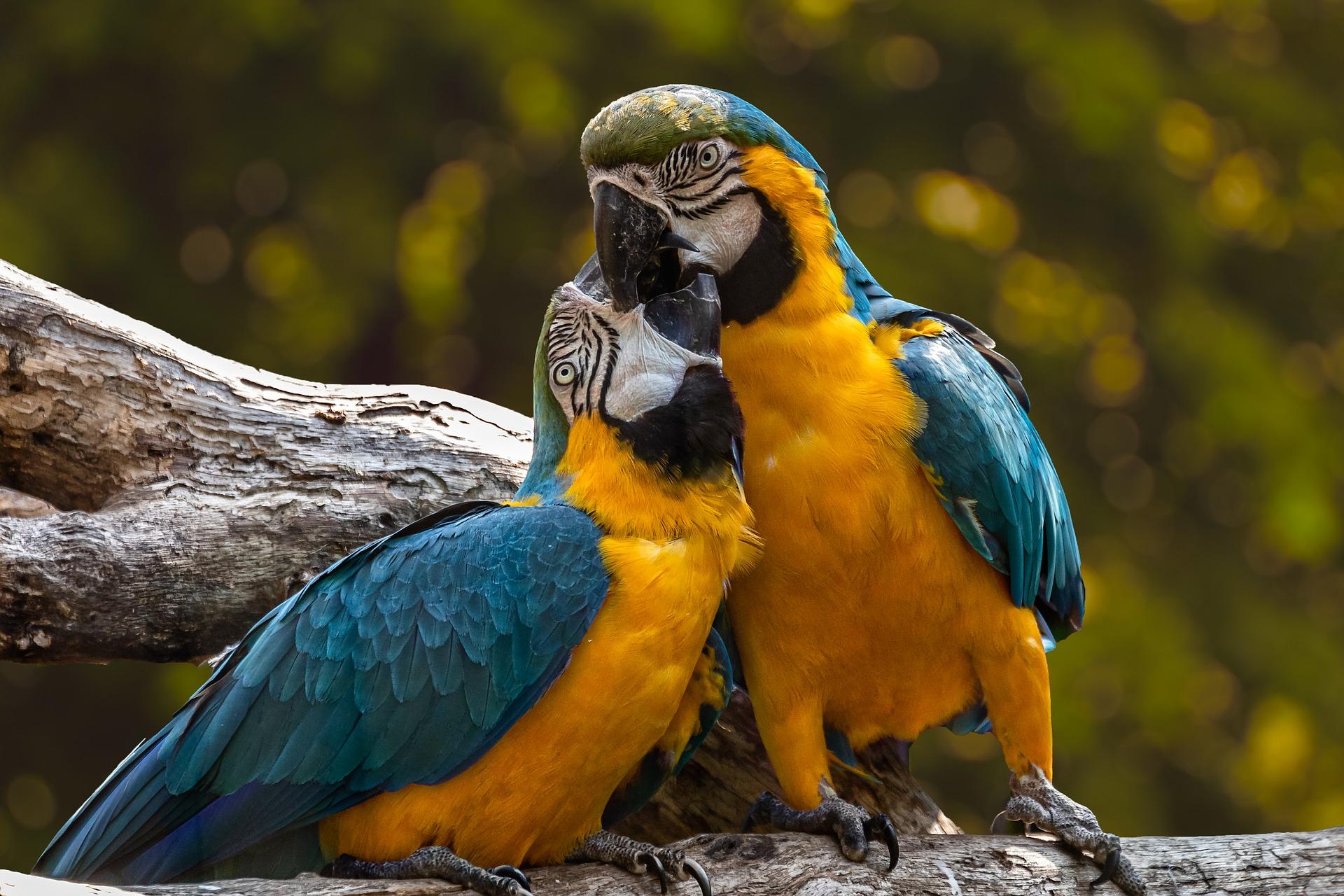 parrots-3427188_1920