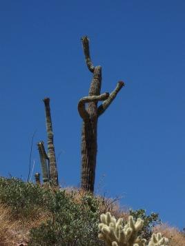 cactus-816345_1920